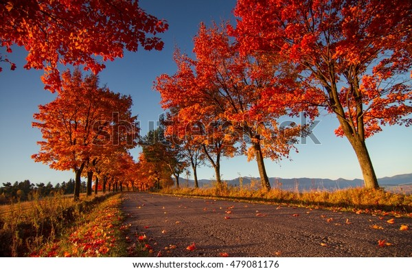 Range of deciduous trees at sunrise. Autumn in all their splendor. Autumn atmosphere at a leafy alley.