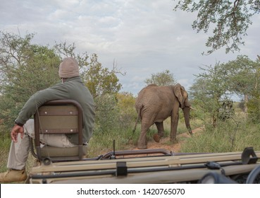 ranger and elephant in the kruger park