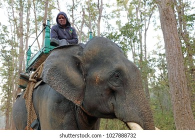 A ranger on an Indian Elephant at Kanha National Park.