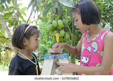 Ranong/ Thai- 4.22.2018: asian girls pose stand to eat many green raw mangoes nearby and eat with the mood to taste very sour, summer seasonal fruits with organic farms, health and agriculture concept