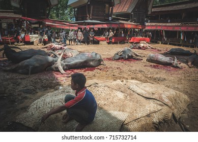 RANTEPAO, INDONESIA - DECEMBER 31, 2009: Funeral ceremony in Tana Toraja near Rantepao in Sulawesi. Cow's are slaughtered to ease the passage to the after life