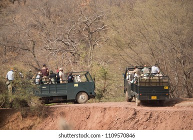 RANTHAMBORE, INDIA-MAY 05: Tourist on canters trying to locate a tiger down the river at Ranthambore National Park, Sawai Madhopur, India on May 05, 2018