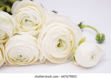 Ranunculus flower bouquet isolated