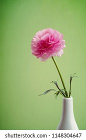 Ranunculus in a white vase on a green background.