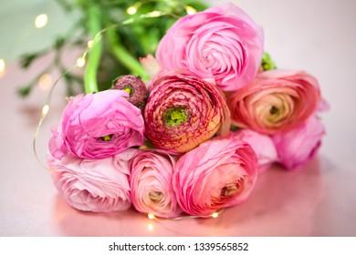Ranunkeln in pink, macro, spring , flowers Ranunculus asiaticus