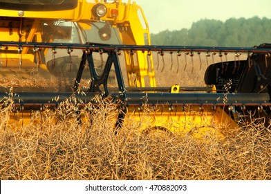 Rape field and combine at work.