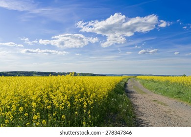 A rape field in spring with farm track