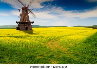 rape field and windmill