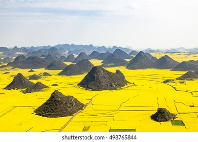 rape fields in luoping