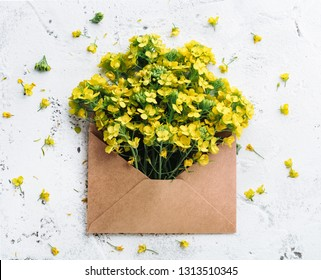 Rape flower in envelope,white background