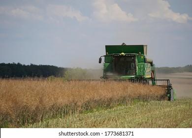 Rape harvest using combine harvester on summer field. Mechanical harvesting of oilseed rape (Brassica napus). production of plant energy for the oil industry. Úri, Hungary - 03/07/2020