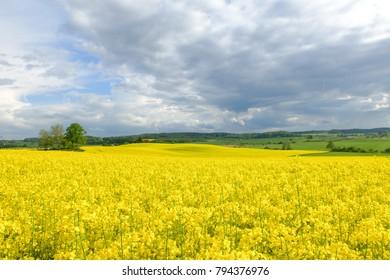 Rape landscape Poland - Shutterstock ID 794376976