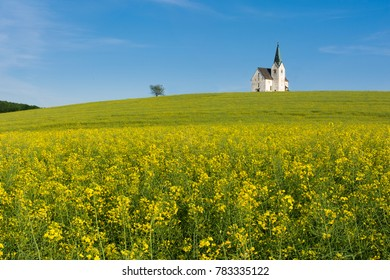 Rapeseed field with catholic church and a tree in Slovenia.
