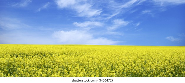 Rapeseed field and clouds in sky