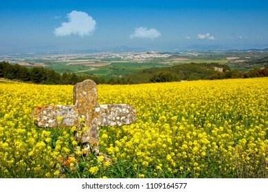Rapeseed field with cross on the pilgrimage route the Way of St James near Artajona, Navarra, Basque Country, Spain, Europe