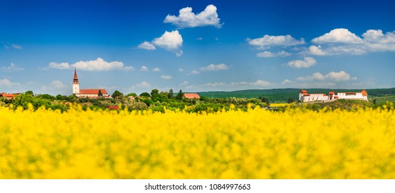 Rapeseed field, Feldioara fortress in Transylvania. Spring yellow rape field landscape in Brasov county, Romania.