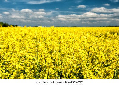 Rapeseed field near Munich