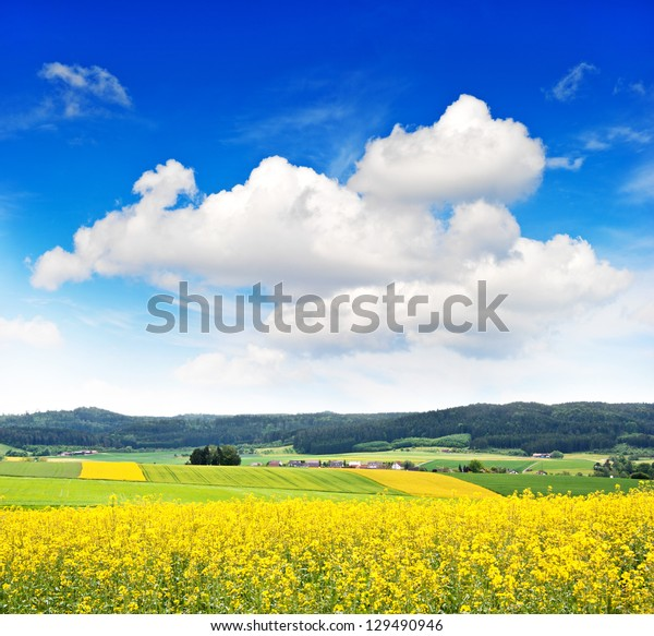 rapeseed field over cloudy blue sky. countryside landscape