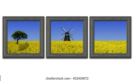Rapeseed field paintings on a white wall