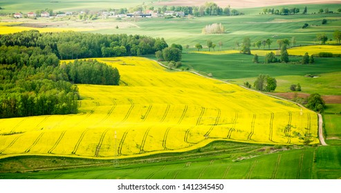 Rapeseed field in Poland, bordered by planting and meadows.