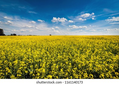 canola field images stock photos vectors shutterstock