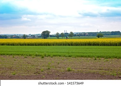 Rapeseed field which is produced rapeseed oil