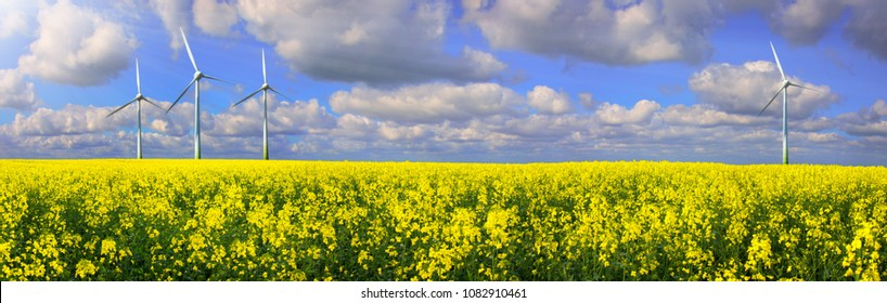 Rapeseed Field With Wind farm - Renewable Energy Panorama
