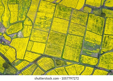 rapeseed flower blooming in farmland on mountainous area, aerial view of land color in spring