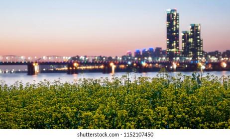Rapeseed flower festival near Hangang River, Seoul, South Korea