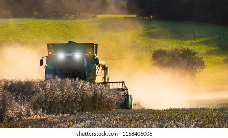 Rapeseed harvesting by combine on summer field. Brassica napus. Rural landscape. Modern harvester machine, dusty land, dry ripe rape. Green plants, trees in background. Agriculture, farm, eco.