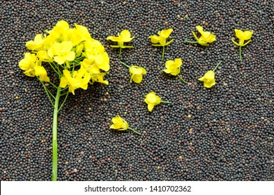 Rapeseed plant with yellow flowers and seeds. Yellow mustard plant. Canola seeds and fresh canola flowers. Rapeseed blossom on the background of seeds close-up. Top view. Brassica napus flowers.