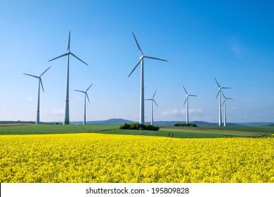 Rapeseed and windwheels