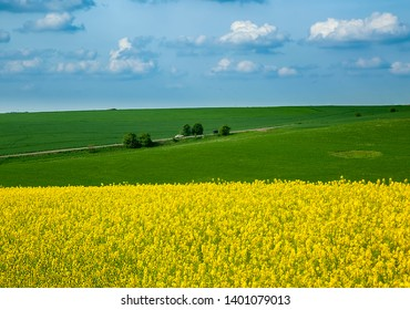 Rapeseed yellow field in sunny day
