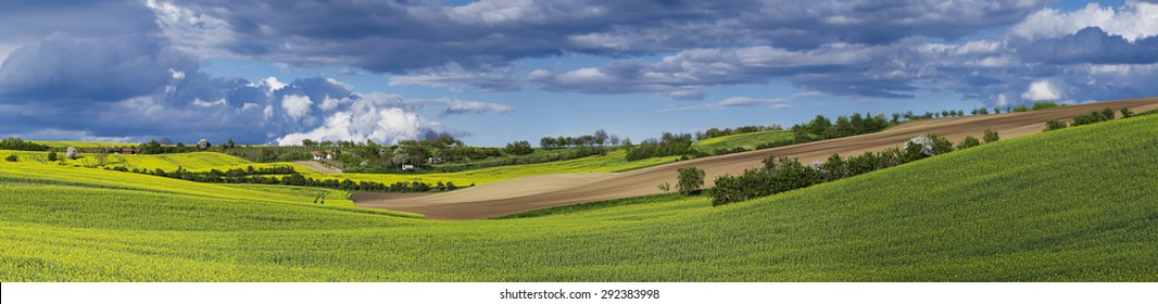 Rapeseed yellow fields in spring with blue sky and hills,  natural eco seasonal floral background, panorama