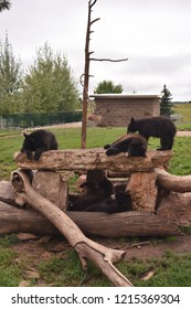 Rapid City, S.D. U.S.A. Sept. 15, 2018. Bear Country U.S.A. Drive-through park with plenty of bears, big horn sheep, elk, bison, wolves, and more.  Gift shop very nice.
