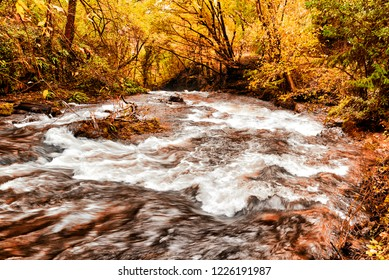 rapids of the stream in the forest during the autumn season