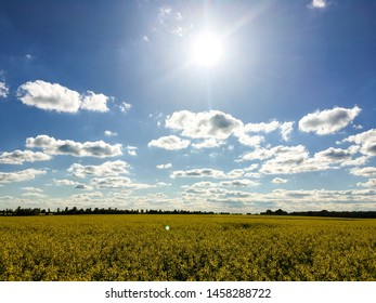 raps, rapeseed, rapeseed field, blüte, sommer, sonne, blossom, agriculture, blue, rural, farm, spring, plant, bright, clouds, outdoor, color, season, countryside, sunny, background, beautiful, field,