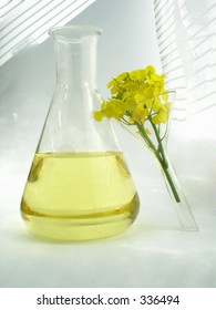 Rapseed Flower Oil