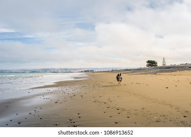 Rarangi Beach, Blenheim, Marlborough, New Zealand: Lovely little dog playing at sandy beach running towards dogs owner best friend at cloudy sky day with the mountain range of world famous wine region