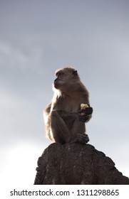 rare beautiful closeup portrait of one monkey holding food sitting on rock in backlight, against sky. Animal in natural habitat