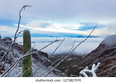 A rare cold and snowy morning in the Sonoran Desert. Finger Rock hiking trail in the Catalina Mountains north of Tucson, Arizona. A saguaro cactus, ocotillo and a cholla cacti, covered in snow. 2018