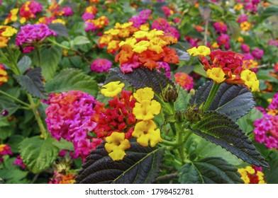 Flores raras y coloridas en un jardín de Ibiza