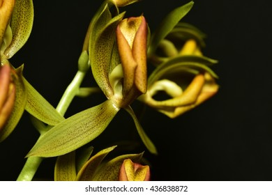 Rare Orange and Yellow Orchid