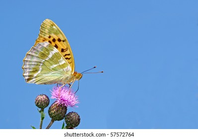 Rare silver washed fritilliary against a blue sky