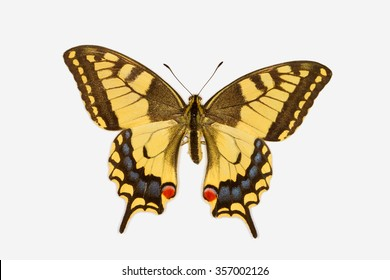 Rare Swallowtail butterfly, latin name papilio machaon isolated on white