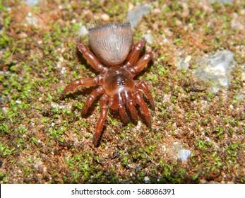 Rare trapdoor spider in Khoayai national park, north-east of Thailand