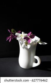 Rare white and violet violets in a vase in spring