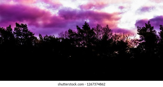 rare winter weather phenomenon in the sky, pink and purple polar stratospheric clouds, forest landscape background