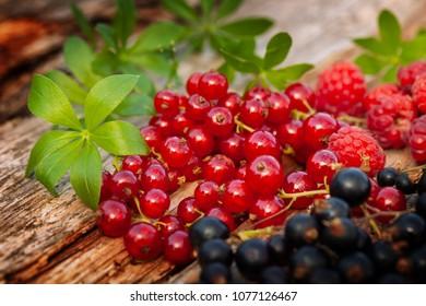 Raspberries, currants and woodruff, freshly harvested
