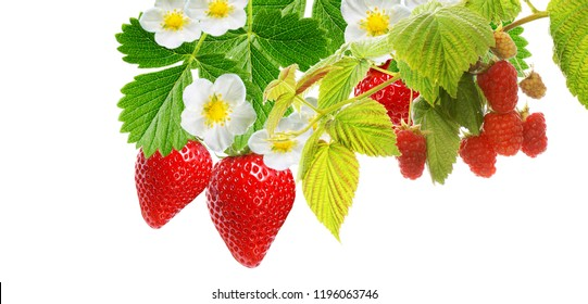 raspberries and strawberries on white